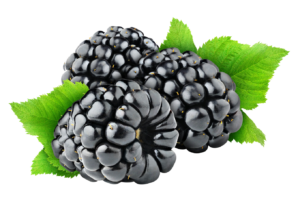 blackberry-fruit-free-png-image