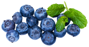 fresh-blueberry-png-image